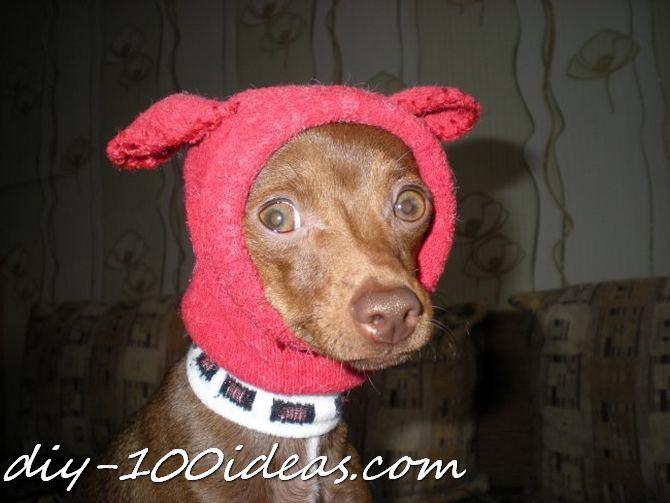 Dog Hat From Sock Diy 100 Ideas