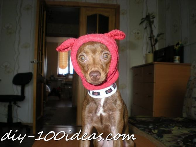 Dog hat from sock (6)